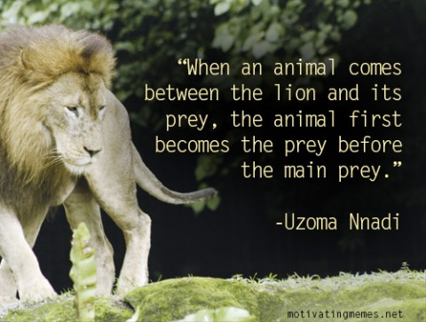 When An Animal Comes Between The Lion And Its Prey Motivating Memes